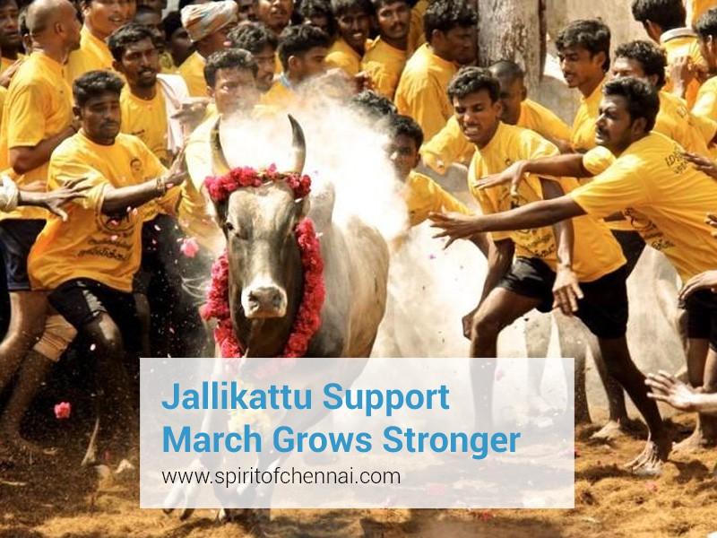 jallikattu-march Mass Protests in Chennai in Support of Jallikattu