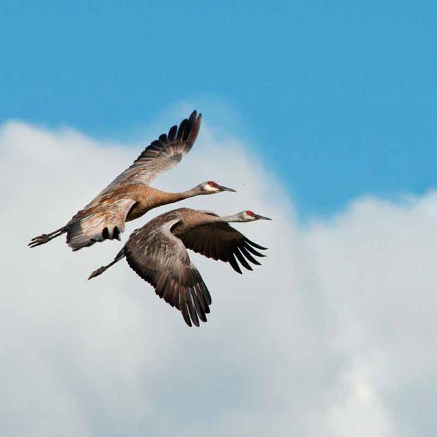 bird-migration-chennai-1 Protecting Chennai's Migratory Birds